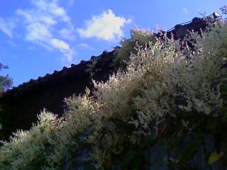 保久良神社お散歩